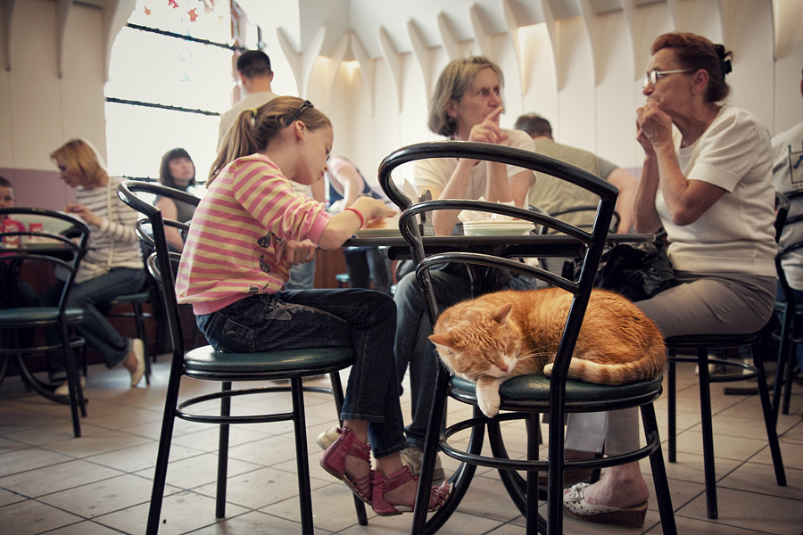 Legendary Donuts hub with its legendary home cat